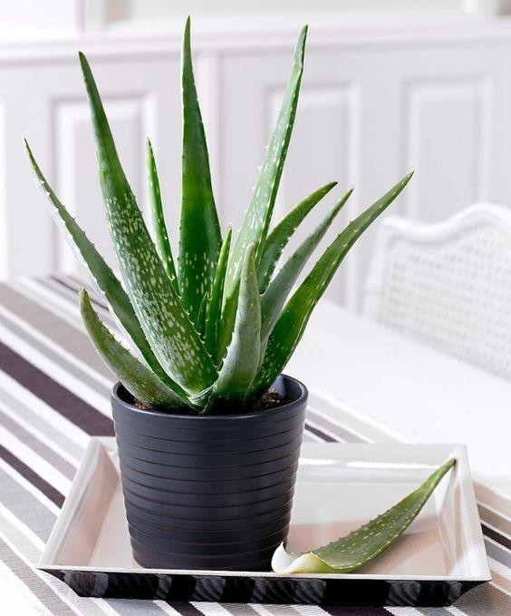 Lectus24.de | 5 Pflanzen, die in jedes Schlafzimmer gehören